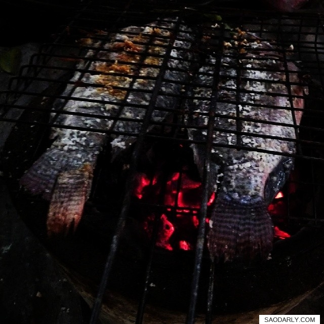 grilled tilapia fish