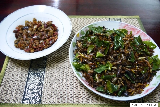 Bugs and Insects for snack
