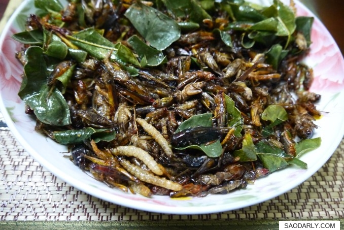 fried bugs and insects in Laos