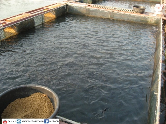 fish farm in tha ngon