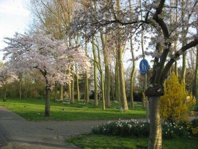 biking trail in Holland