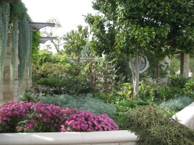 Plants and ground covers
