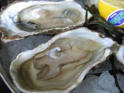 dutch oysters