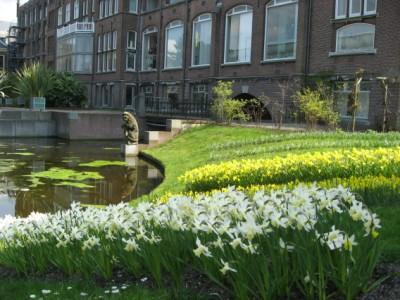 Hortus Botanicus, Leiden