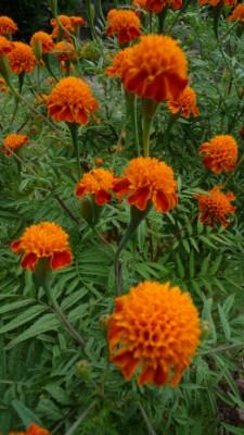 A garden in Laos