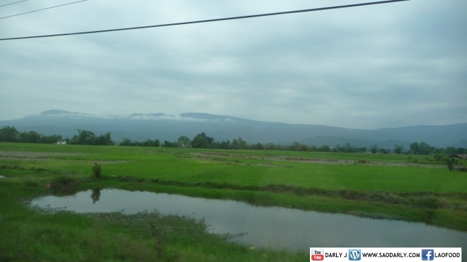 rice paddy in Laos