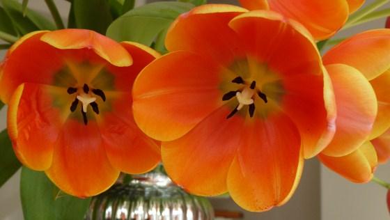 Queen's Day and the Orange Craz