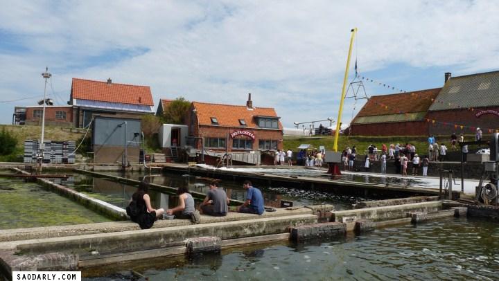 Yerseke Netherlands Mussels Festival