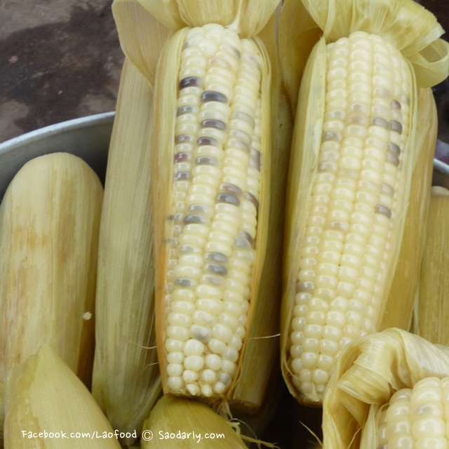 Corn at Kok Pho Market